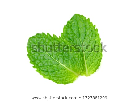 peppermint plant stock photo © hamik