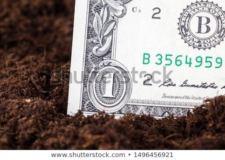 доллара · наличных · деньги · почвы · землю - Сток-фото © stevanovicigor