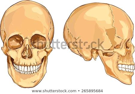 Stock fotó: Csontok · koponyák · boglya · felső · kéz · férfi