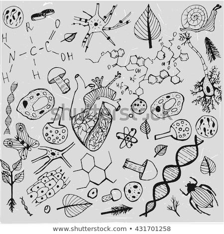 Tanul biológia kézzel írott fehér kréta iskolatábla Stock fotó © tashatuvango