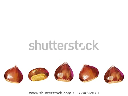Watercolor illustration of chestnut Stock photo © Sonya_illustrations