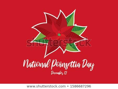 12 december Poinsettia Day Stock photo © Olena