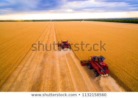 Aerial view of combine harvesting corn field Stock photo © stevanovicigor
