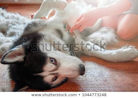 veterinário · medicina · masculino · veterinário · pomada - foto stock © oleksandro