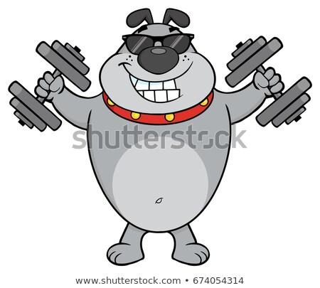 Souriant gris bulldog mascotte dessinée personnage lunettes de soleil Photo stock © hittoon