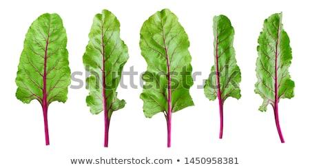 crudo · remolacha · hojas · la · luz · natural · atención · selectiva · enfoque - foto stock © m-studio