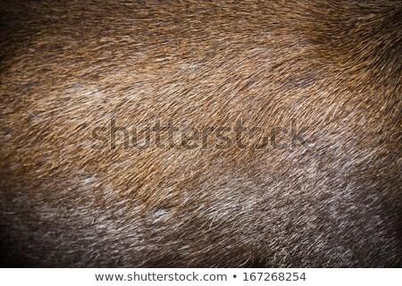 patroon · echt · herten · bont · textuur · abstract - stockfoto © boggy