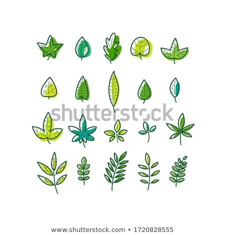 eco · yaprak · afişler · dizayn · ağaç · soyut - stok fotoğraf © Linetale