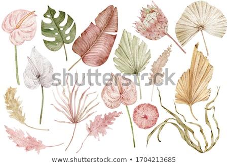hand drawn watercolor illustration set with flowers stock photo © margolana