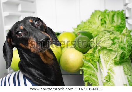 Bio pozostawia gotować portret zielone kuchnia Zdjęcia stock © ra2studio