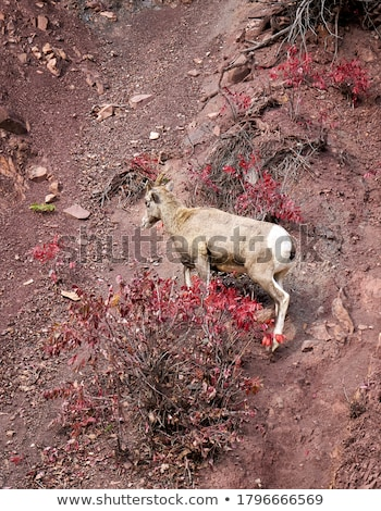 Sheeps hred in the mountains Stock photo © joyr