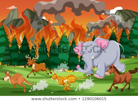 тигр запустить далеко wildfire иллюстрация огня Сток-фото © bluering