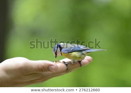papegaai · vogels · permanente · rij · familie · menigte - stockfoto © thp