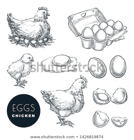 vector set of chicken and egg Stock photo © olllikeballoon