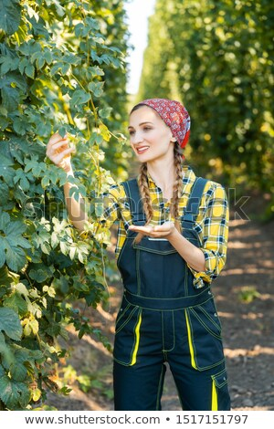 Woman farmer testing the quality of the hop harvest Foto stock © Kzenon
