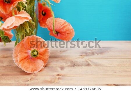 Roze klaprozen glas vaas detail zachte Stockfoto © sarahdoow