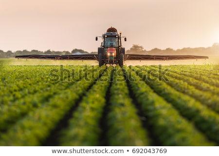 Tracteur domaine printemps jeunes tournesol plantes Photo stock © simazoran
