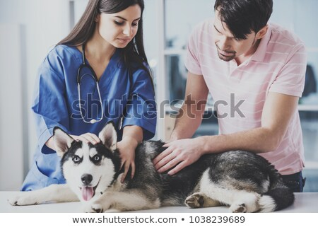 Portré díszállat tulajdonos női állatorvos kutya Stock fotó © Kzenon