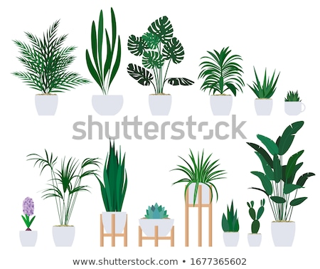 cactus flower in pot houseplant isolated icon stock photo © robuart