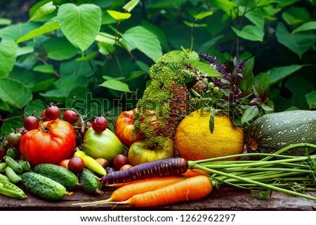 Rich harvest Stock photo © andreasberheide