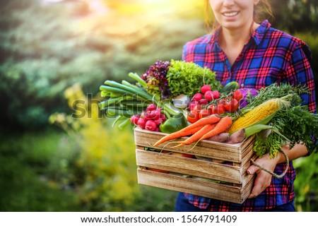 Raw Vegetables Stock photo © zhekos