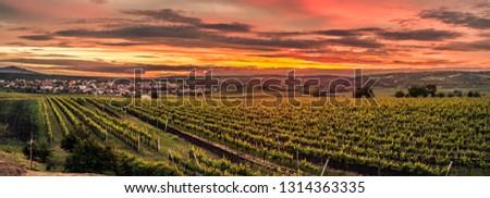 vinha · República · Checa · paisagem · plantas · agricultura · crescer - foto stock © phbcz