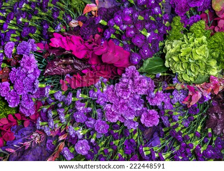 multi colored dianthus background stock photo © zhekos