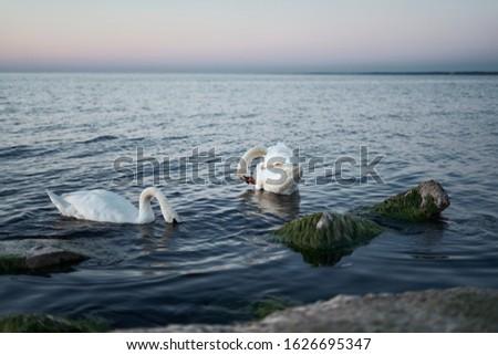 Couple Stock photo © disorderly
