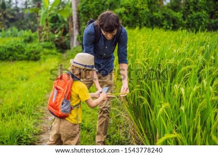 Pai filho plantas aplicação realidade Foto stock © galitskaya