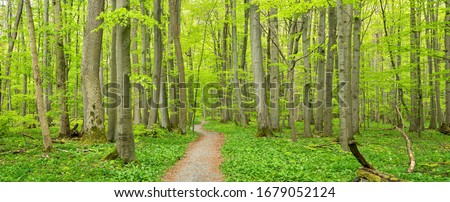 footpath on forest Stock photo © Antonio-S