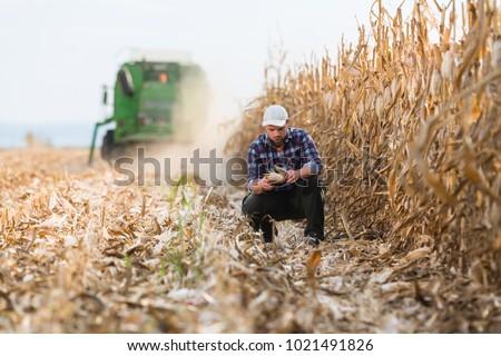 çiftçi mısır alan bitki eller Stok fotoğraf © simazoran