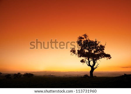 Gum Trees - Australia Stock photo © jeayesy