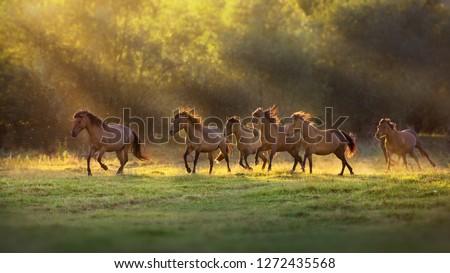 Nyáj lovak vidéki Montana USA fű Stock fotó © emattil