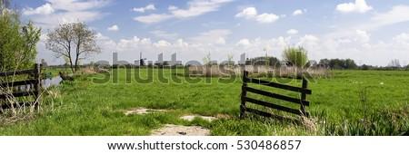 типичный голландский пейзаж коров синий Сток-фото © ivonnewierink