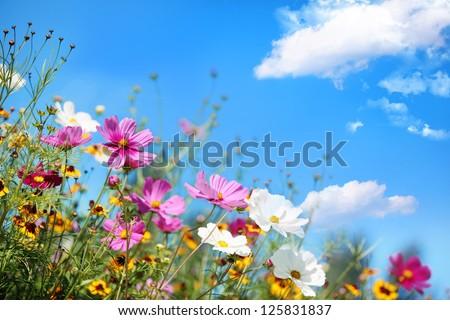 белый Полевые цветы Blue Sky небе природы фон Сток-фото © Julietphotography