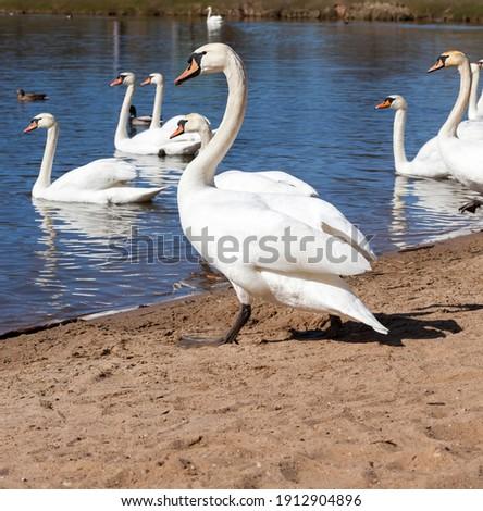 duck ashore lake Stock photo © konturvid