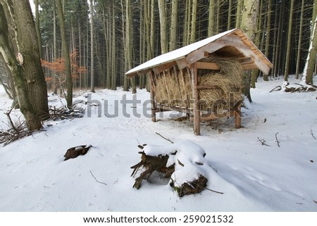 winter in forest with feeder Stock photo © jarin13