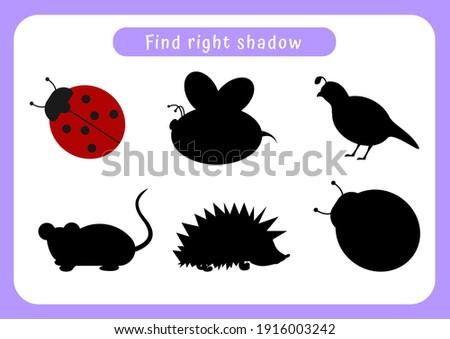 encontrar · direito · sombra · besouro · jogo · crianças - foto stock © olena
