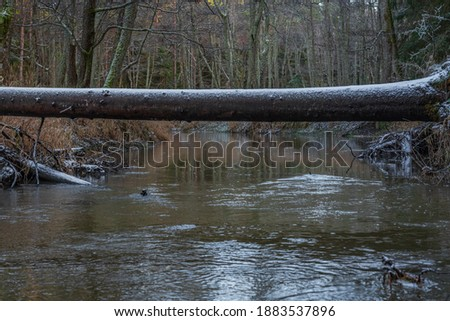 fallen tree in forest stock photo © pashabo