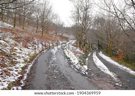 A country road with trees covered in snow, Wales UK. Stock photo © latent