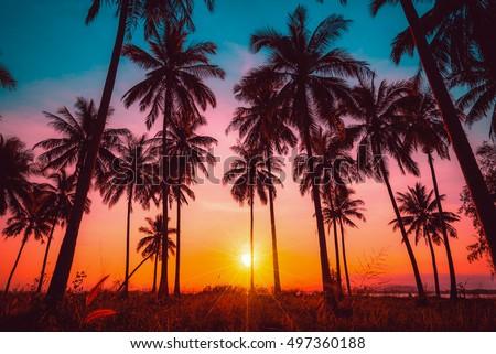 tree at sunset stock photo © phbcz