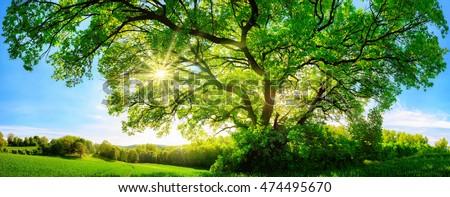 Tavasz ág fák nap sugarak idő Stock fotó © romvo