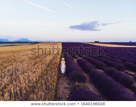 Nő élvezi illat levendula farm utazás Stock fotó © Kzenon