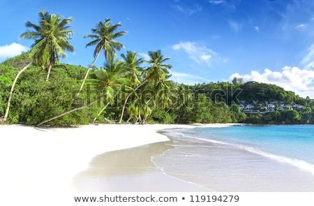 海景 サンゴ 砂 熱帯ビーチ 白 サーフィン ストックフォト © vapi