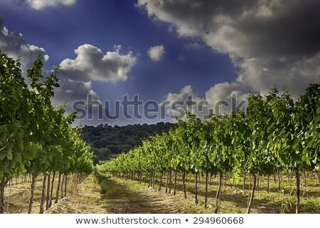 HDR Grapes Stock photo © bobkeenan