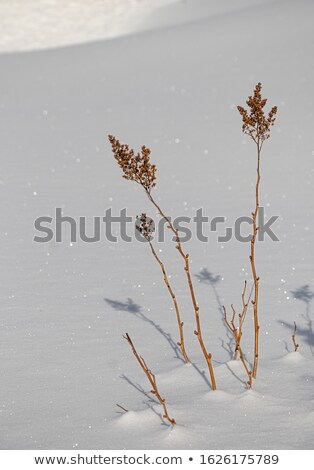 Pure white pristine snow. Texture of white snow with shadows Stock photo © galitskaya
