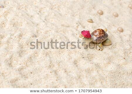 sand shape made by turtle mold on summer beach Stock photo © dolgachov