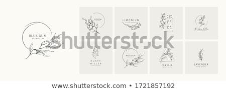 красивой элегантный Логотипы свадьба коллекция аннотация Сток-фото © SArts