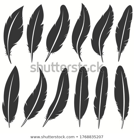 Bird feather icon, writing symbol. Fallen fluffy feathers isolated. vector Stock photo © Andrei_