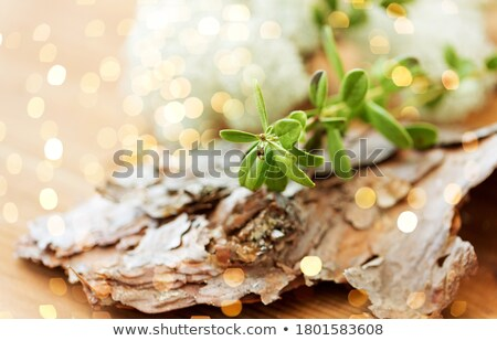 close up of cowberry plant and pine tree bark Stock photo © dolgachov